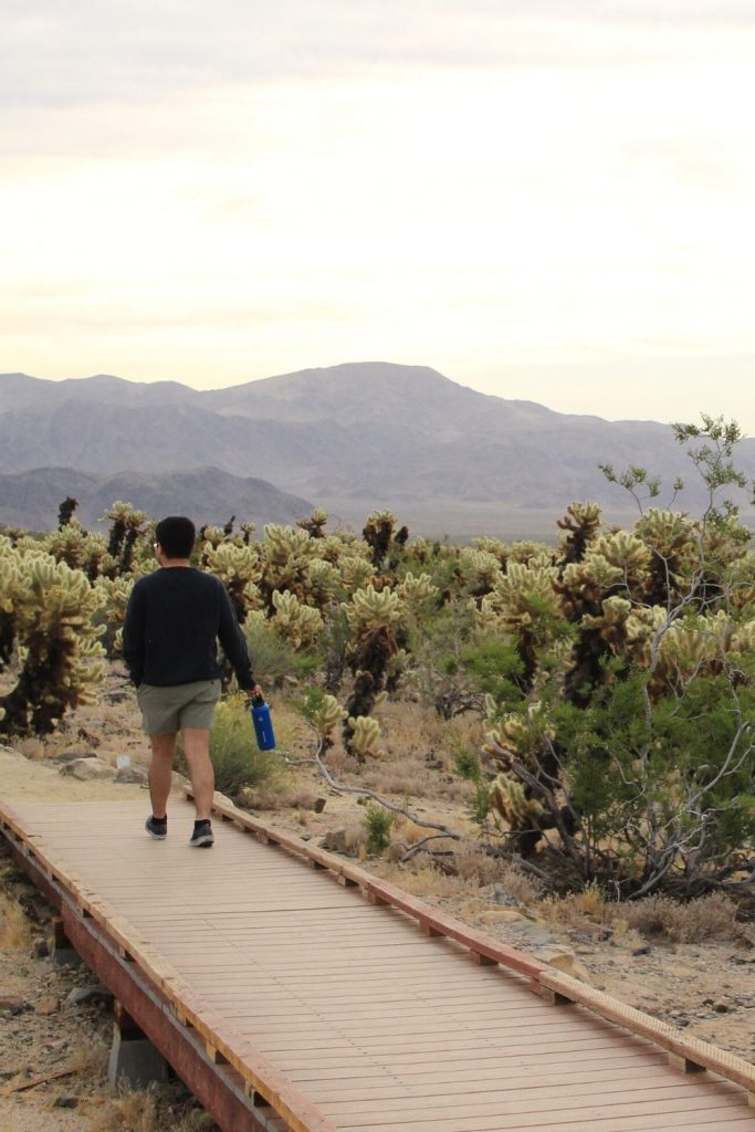Man wearing a blue sweater walking on a bridge surrounded by cholla cactus at Joshua Tree National Park