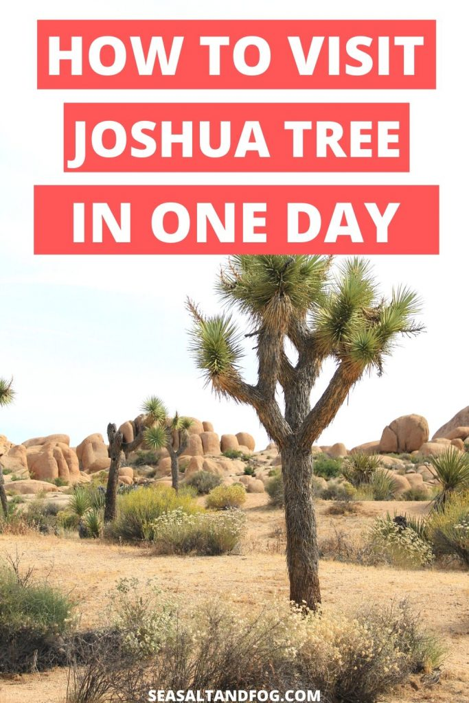 "Picture of Joshua Tree with coral boxes filled with white text that say ""How to Visit Joshua Tree in One Day"""