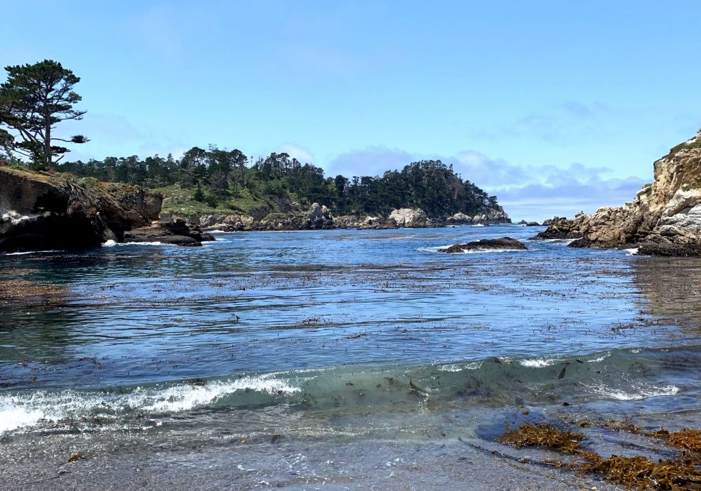 View of Ocean trees and rocks at Point Lobos