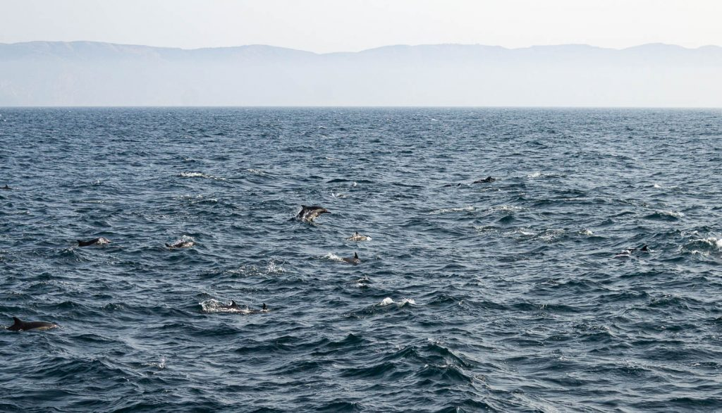 dolphins dancing in the ocean with shape of island in the background