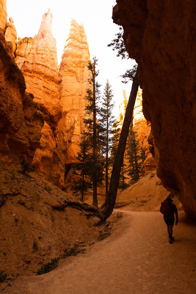 hiker walking underneath rock overhang with trees leaning against the rock at Bryce Canyon