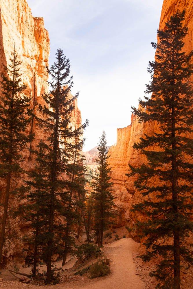 Trees and canyon walls from the Navajo Loop Trail at Bryce Canyon National Park