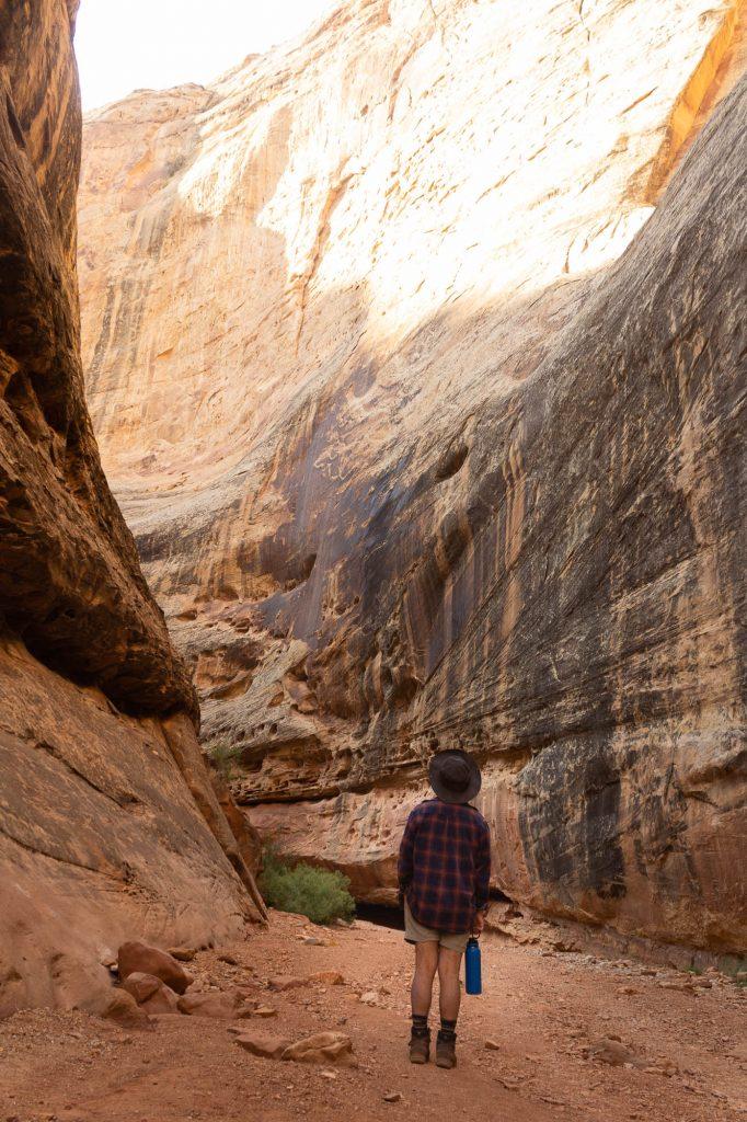 Hiker admires tall and narrow canyon walls at Capitol Reef National Park